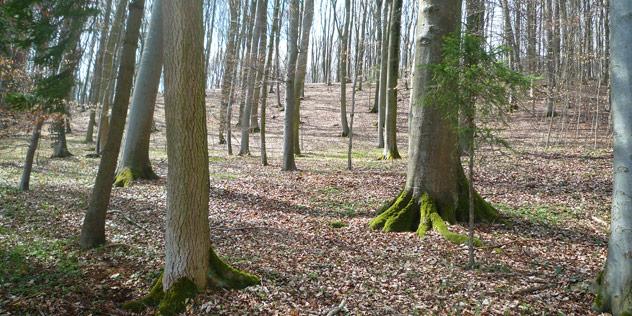 Ein Wald,© ELKB / Lutz Neuschwander